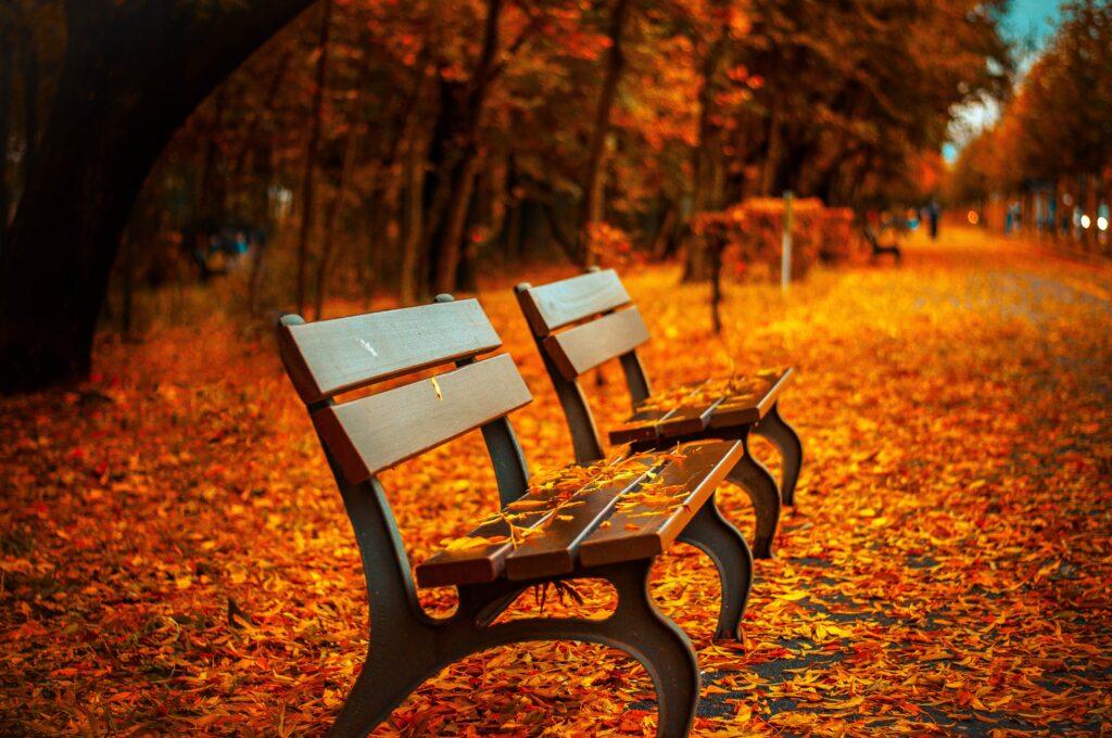 thu vàng ghế công viên
